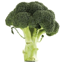fresh natural broccoli seeds