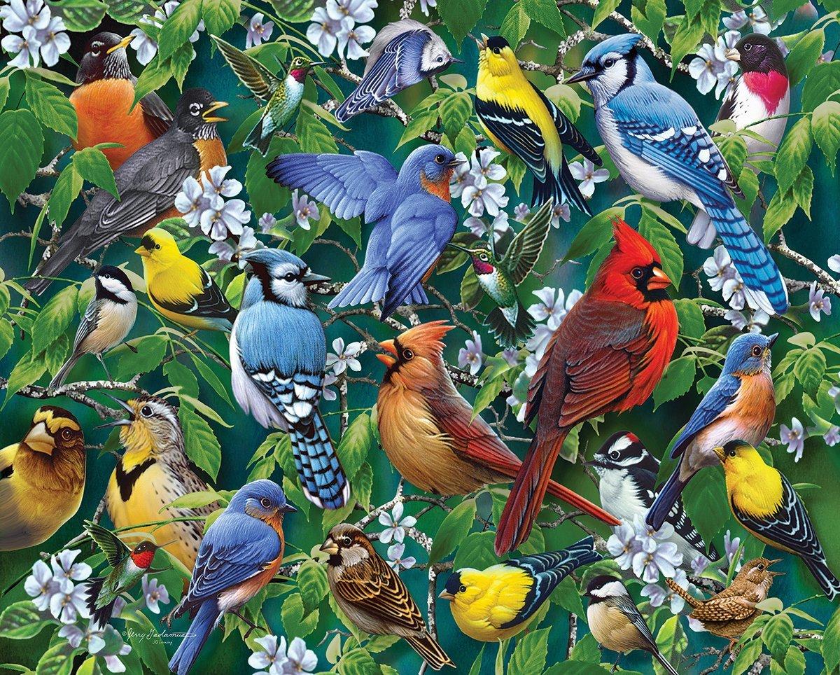 будущие птицы разных стран иные