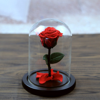 Whole High Quality Small Rose Gl Dome Preserved In Mini
