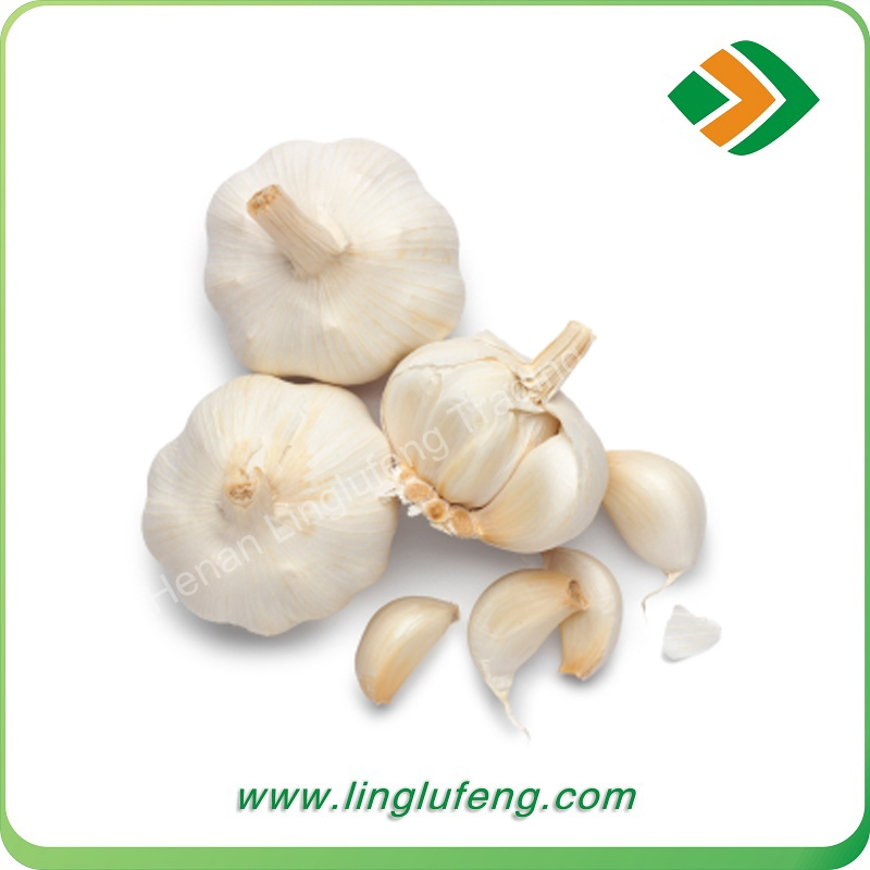 2016 New crop fresh normal white garlic list of vegetables and fruits vegetables
