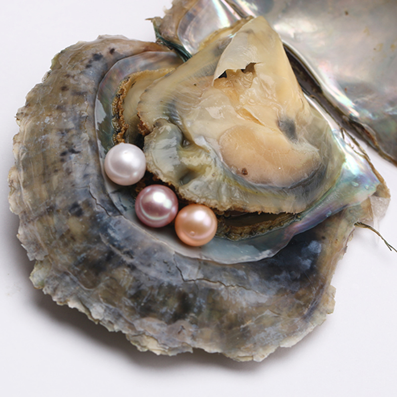 Real Oyster With Pearl | www.pixshark.com - Images ...