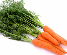 New crop carrot fresh vegetables baby carrots for wholesales
