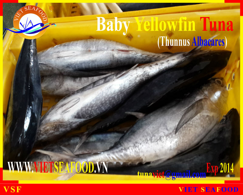 FRESH RAM MATERIALS YELLOWFIN TUNA