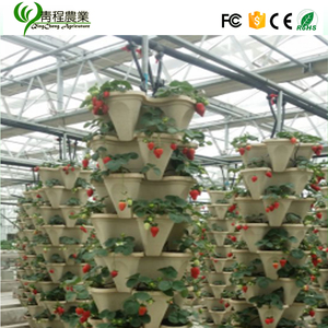 Made in China price strawberry fresh seeds for sale