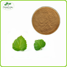 High quality Raspberry leaf Extract