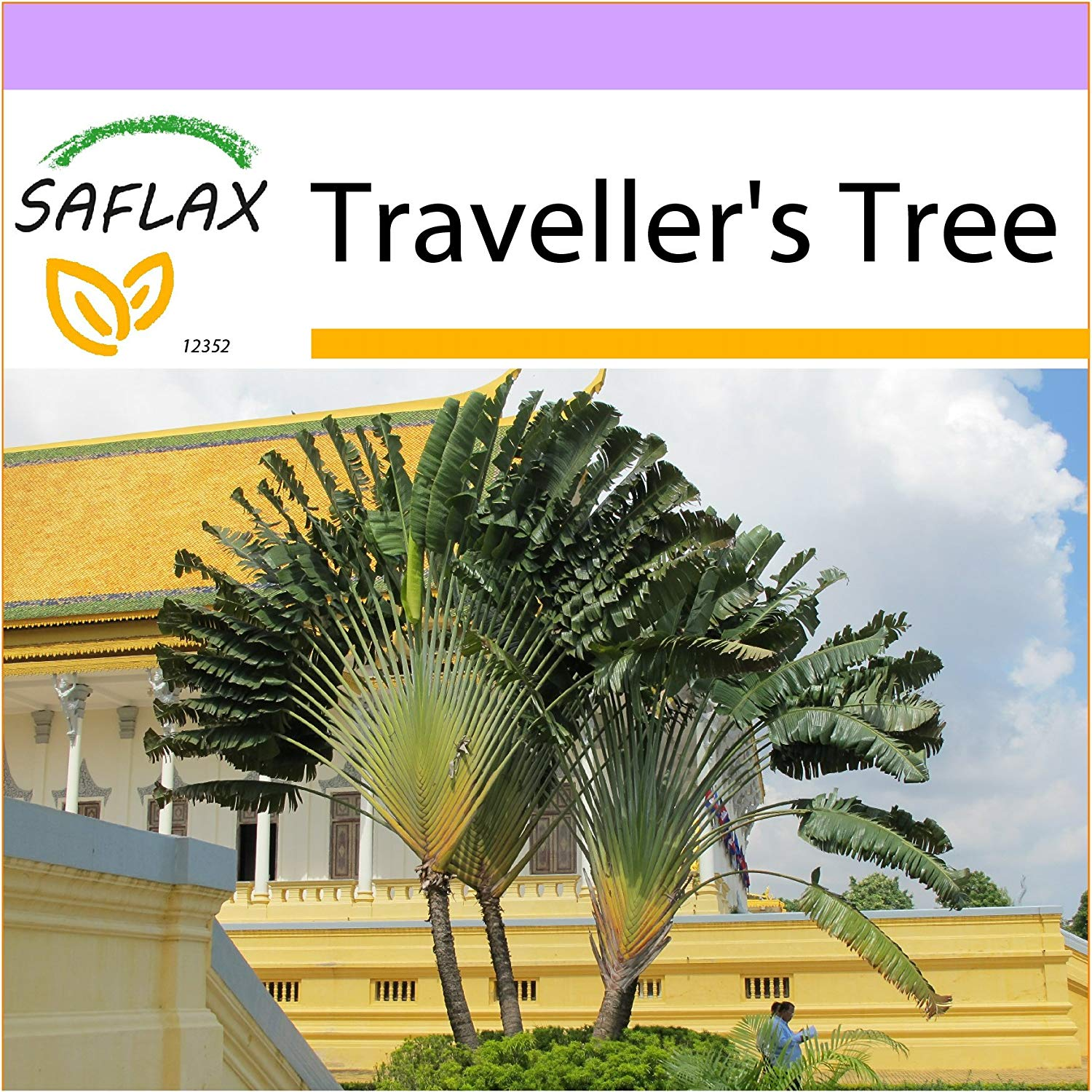 SAFLAX - Traveller's Tree - 8 seeds - Ravenala madagascariensis