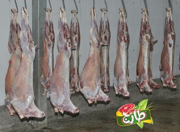 Frozen Halal Mutton (goat) - Buy Halal Mutton Product on Alibaba com