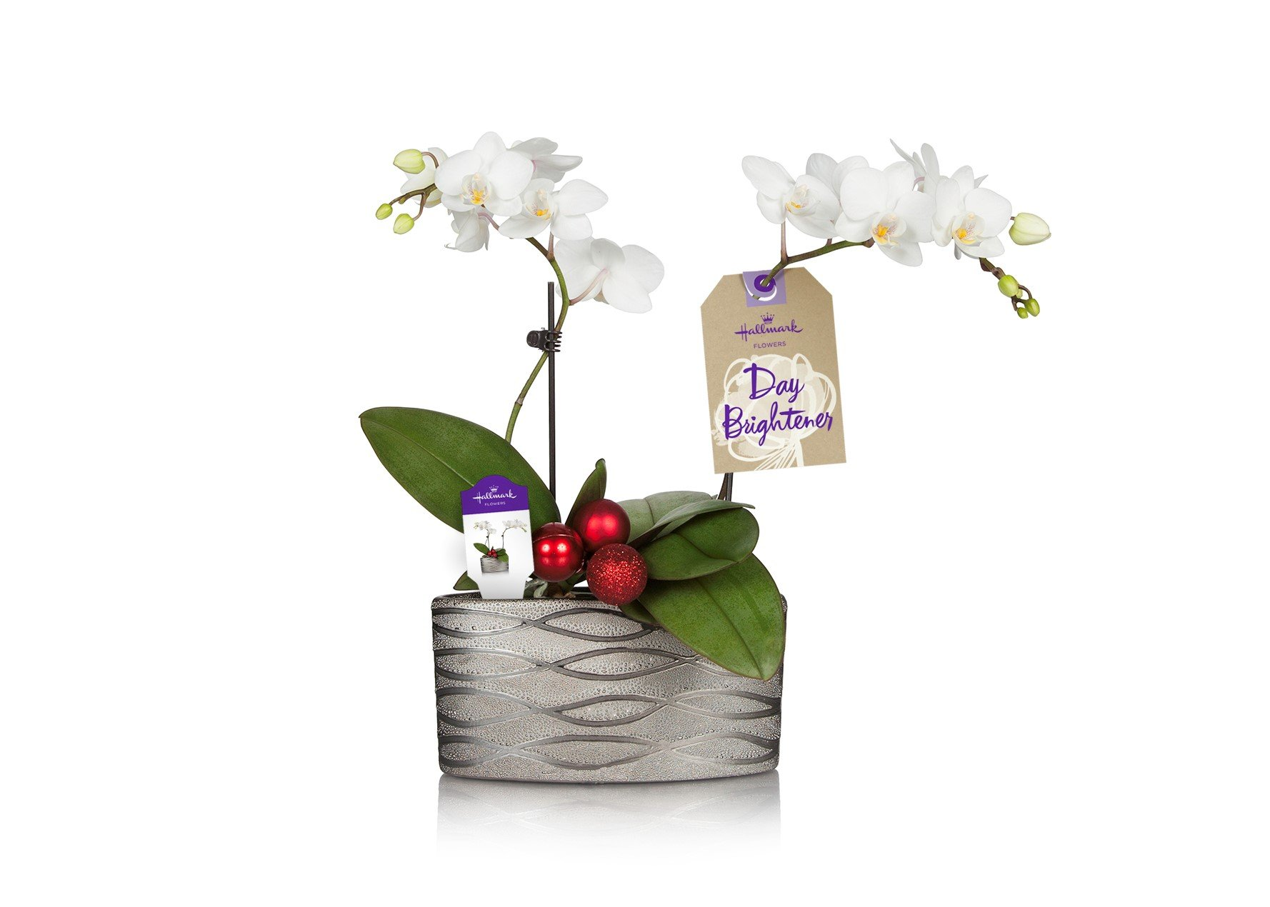 Cheap White Container Flowers Find White Container Flowers Deals On