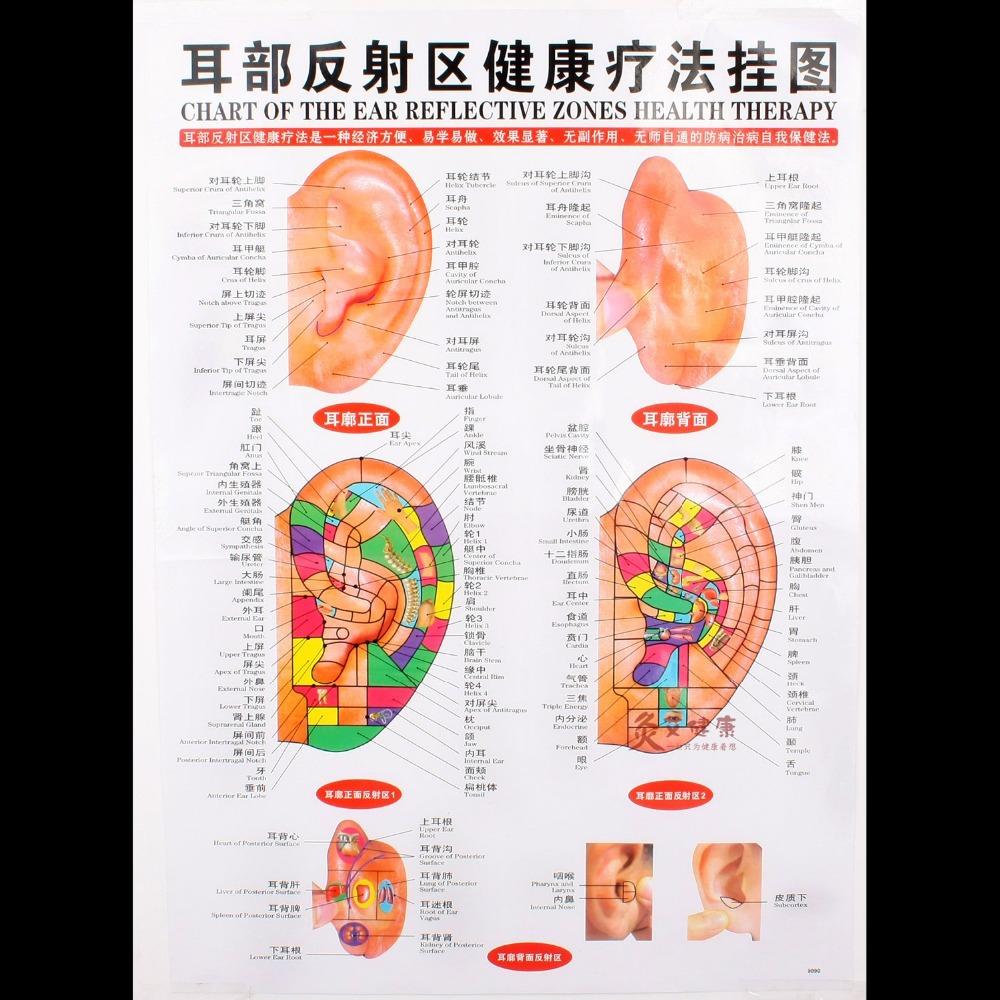 Tableau de l'oreille réfléchissante zone thérapie de santé