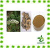 High quality Cimicifuga Racemosa extract powder with best quality