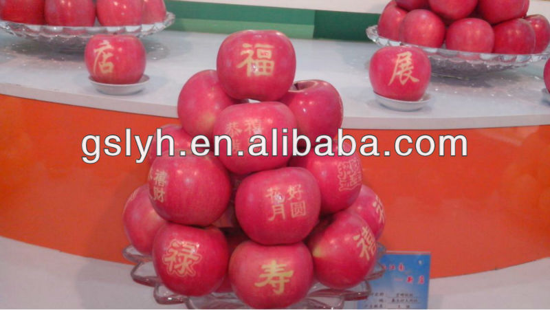 Fresh Apple in Jingning