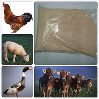 Feed Yeast for poultry feed additive with best price & high protein
