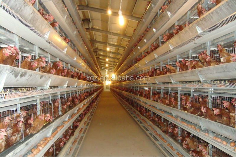 modern advaned prefab poultry house for sale in africa