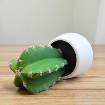Artificial Office Desk Decoration Cactus Cactus Plant