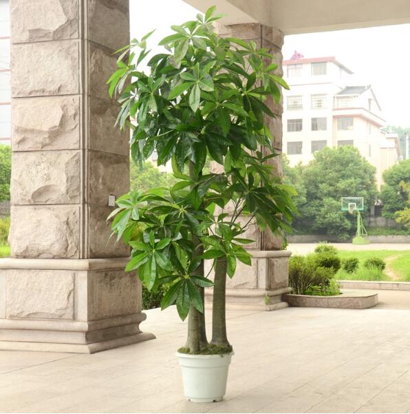 Plantas decorativas interior planta de interior - Macetas de interior ...