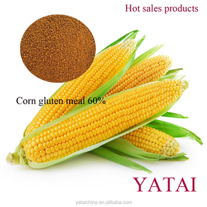 Yellow Powder Corn Gluten Meal of high protein for animal feed