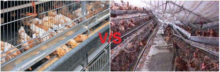 Chiken cage (54)_.jpg