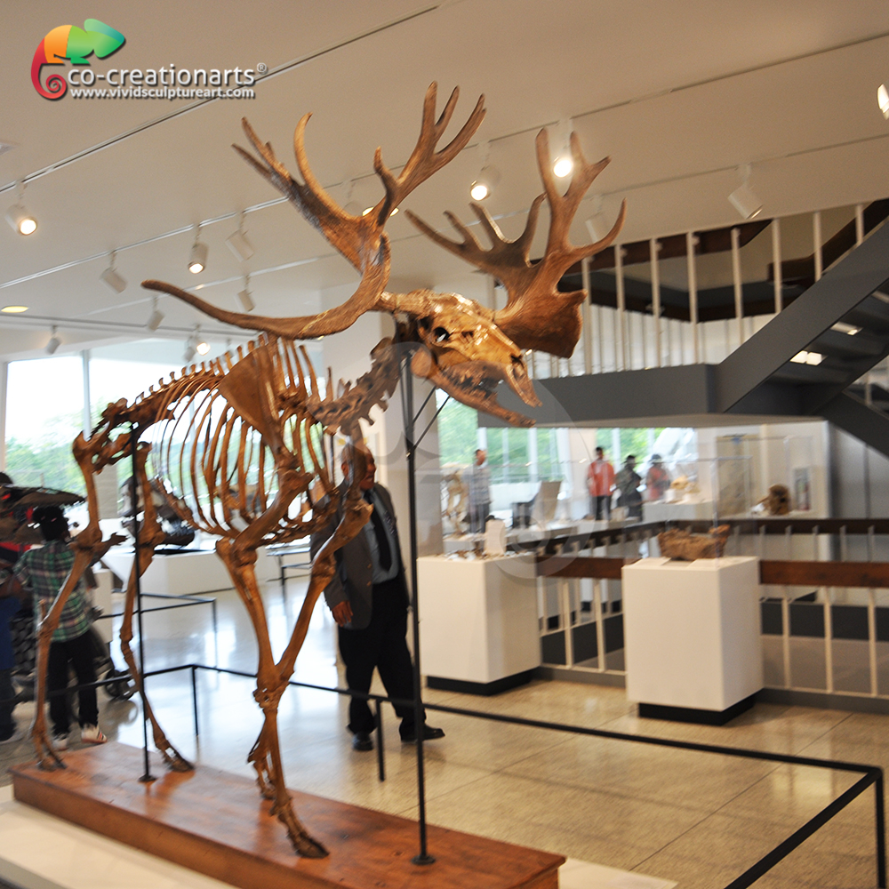 Life size animal fossil replicas