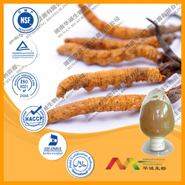 GMP&ISO 10-40% Polysaccarides Nepal Cordyceps Sinensis