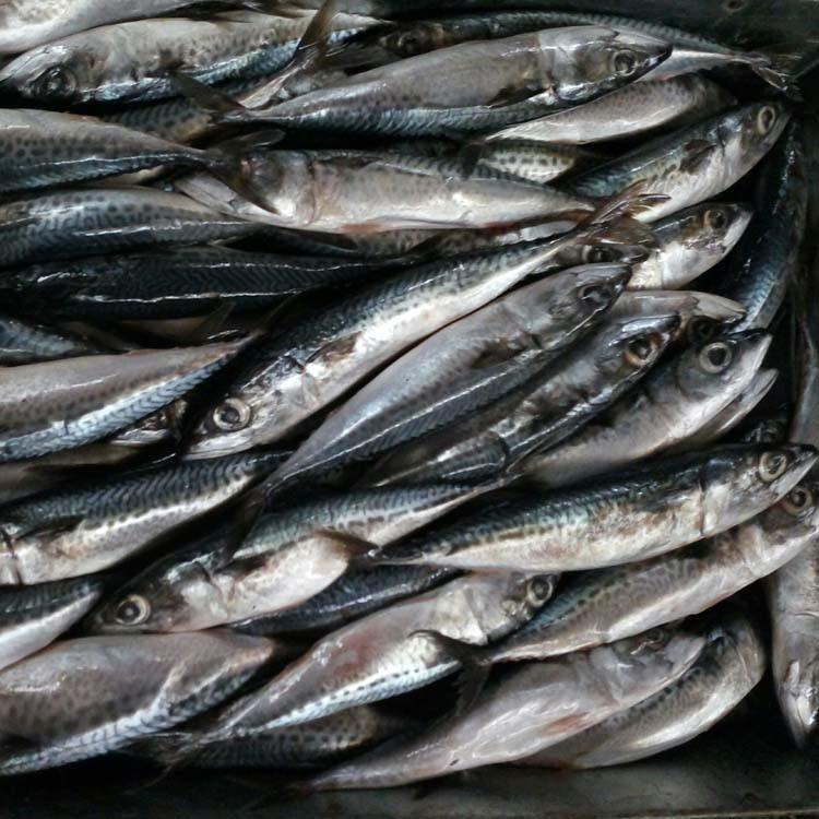 Морская рыба вьетнам фото