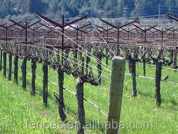 Wine Trellis System Buy Grape Vineyard Trellis All Kind