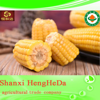 newest wholesale wholesale price cheap yellow corn for animal feed