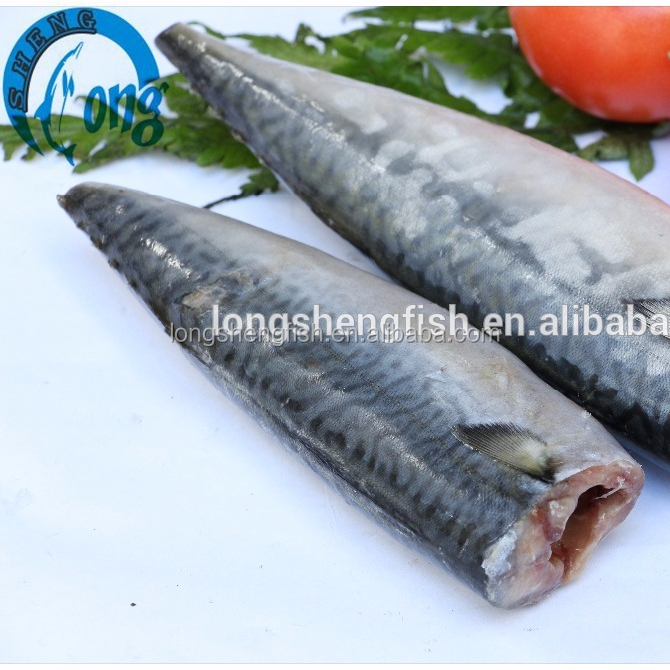 New Coming Sea Frozen Pacific Mackerel HGT (Scomber Japonicus)mackerel fish