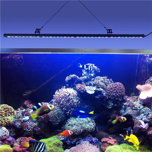 1000K white blue green uv full spectrum 45 inch 36x3w 108w coral reef used led aquarium light