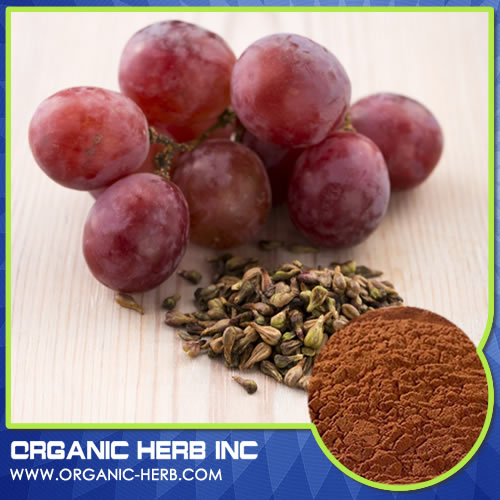 Hot sell healthy grape seed power