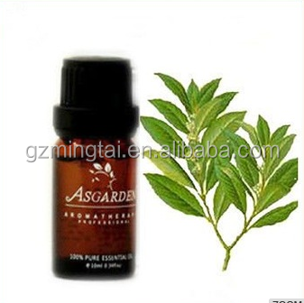100% Pure Therapeutic Grade Laurel Essential Oil Act As an Effective Painkiller