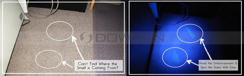 Bed Bugs Lice Nits Finding 14 Led 395nm Uv Black Light Ultraviolet ...