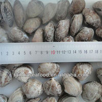 Frozen yellow baby clam top shell clam from China supplier