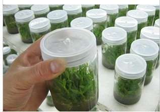 Various Kinds Glass Plant Tissue Culture Container