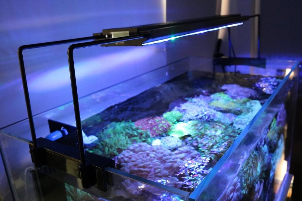 135w full spectrum wholesale outdoor high bright fish tank for Outdoor fish tank for sale