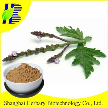 Natural Blue Vervain Verbena Extract Powder Herb Plant Extract 4:1