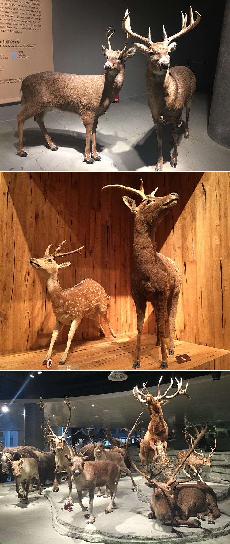 KANO-068 Jungle Lifelike Animatronic Deer