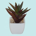 Succulent plant white artificial cactus plants manufacturer