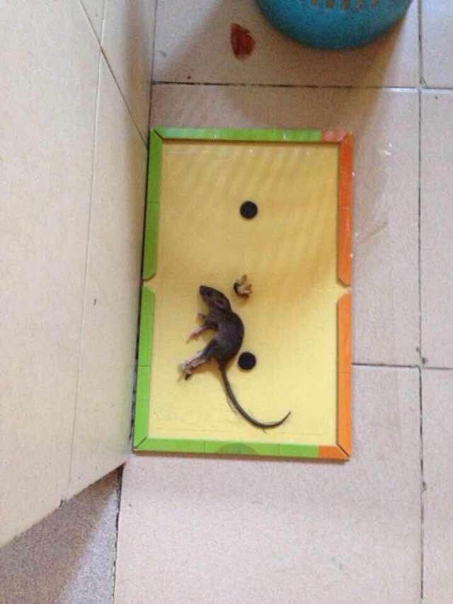 2018 amazon top sale mousetrap humane automatic gule rat mice trap