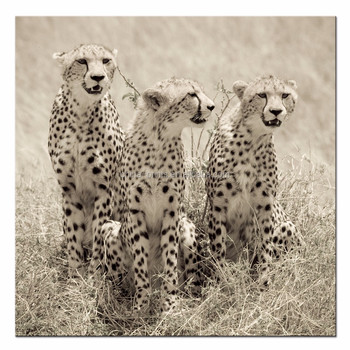 Animal Canvas Prints Cheetah Mom And 2 Cubs On Plains Decorative ...