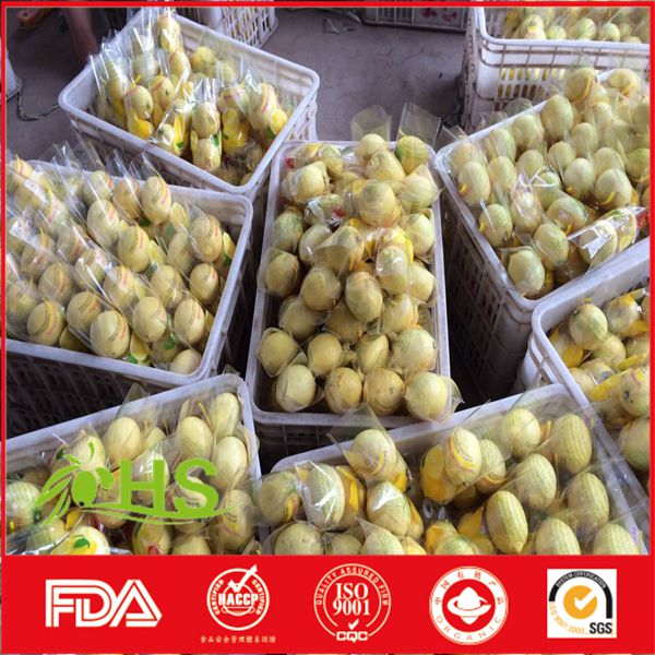 Fresh lemon with best price and quality