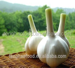 New crop best quality fresh garlic from China