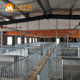 Pig farming equipment Galvanized steel pipe pig fatten cage fatten crates pig finishing stall