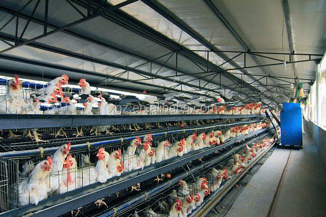 Chicken Farm with Equipment