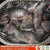 tilapia gutted and scaled quick frozen