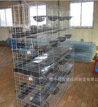 Poultry equipments quail farming Bird cages for quails