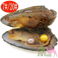 Free Shipping freshwater aquaculture love wishes pearl oyster and pearl Japan Akoya shell mix 28 color DIY jewelry wholesale