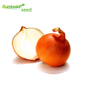 vegetable yellow onion seeds price planter india price