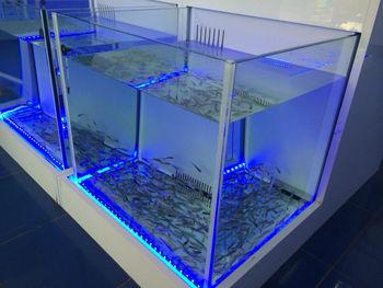 Buy Garra Rufa fish Pedicure Setup - YouTube