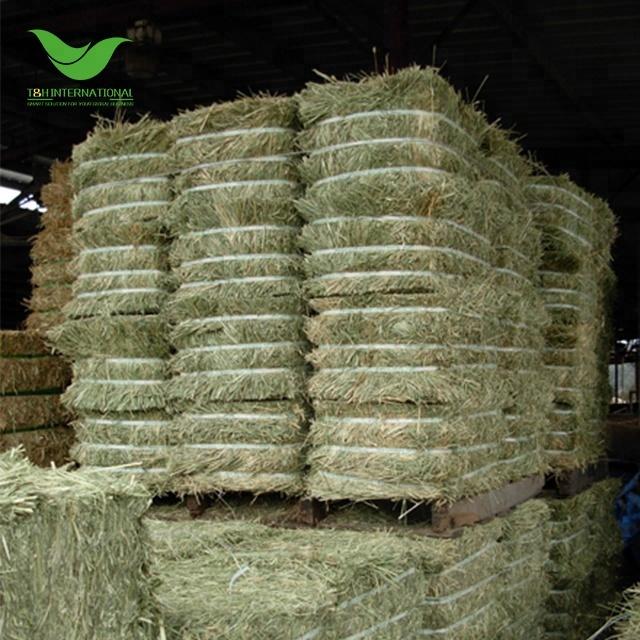 Mỹ Chất Lượng Tốt Cỏ Linh Lăng Hay LUCERN Kiện Cho Ngựa Sữa Trang Trại Bò Cừu Lông Lạc Đà Vật Nuôi