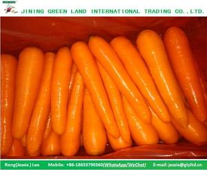 LOWEST PRICE 2016 NEW CROP FRESH CARROT ON SALE